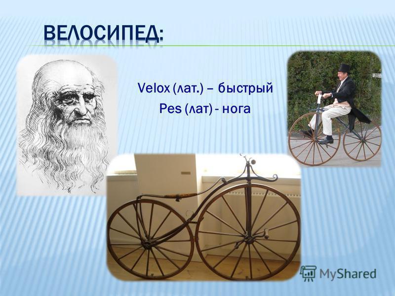 Velox (лат.) – быстрый Pes (лат) - нога