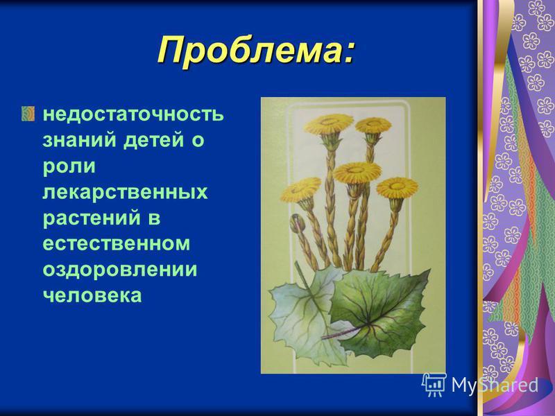 Проблема: недостаточность знаний детей о роли лекарственных растений в естественном оздоровлении человека
