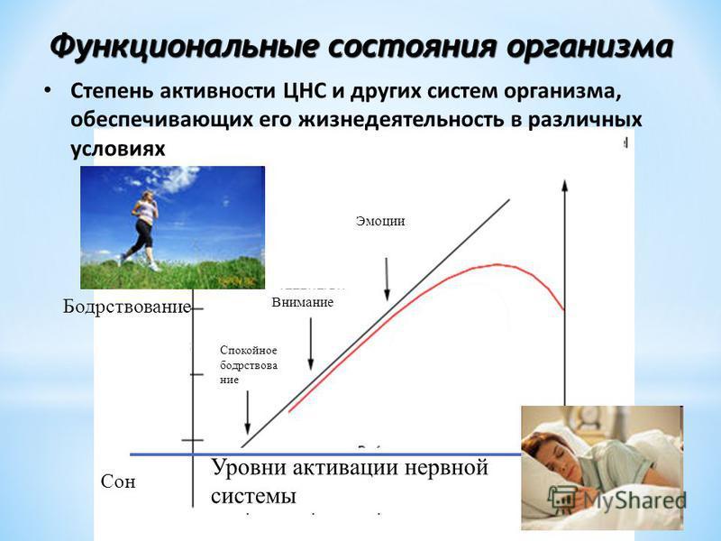 грфик физической активности человека