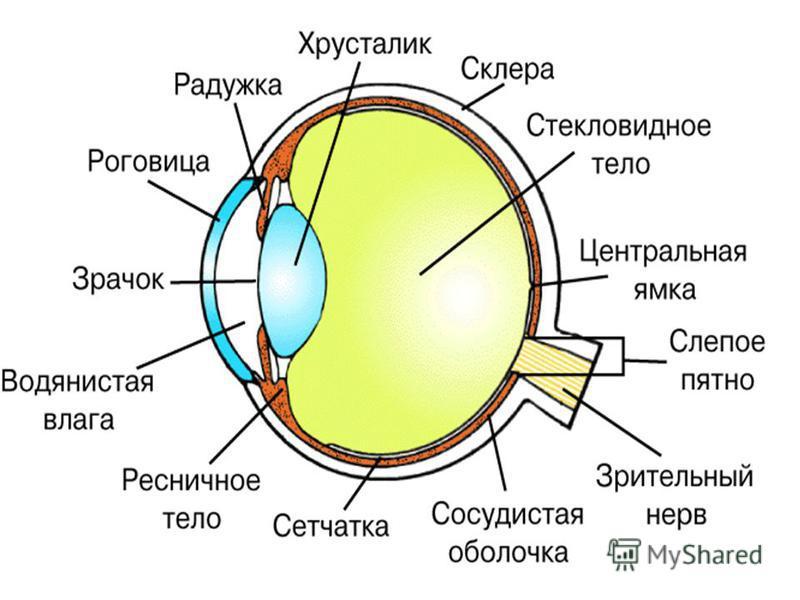 Доклад по биологии на тему гигиена зрения 243