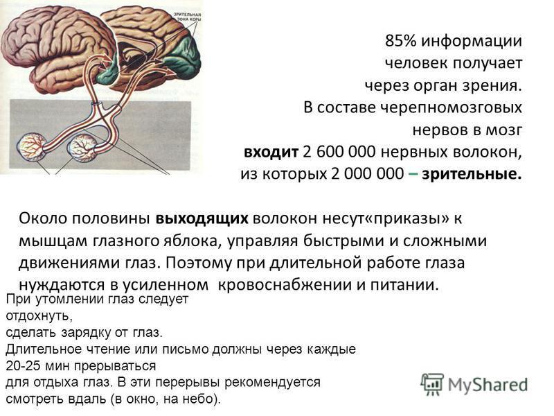 85% информации человек получает через орган зрения. В составе черепно-мозговых нервов в мозг входит 2 600 000 нервных волокон, из которых 2 000 000 – зрительные. Около половины выходящих волокон несут«приказы» к мышцам глазного яблока, управляя быстр