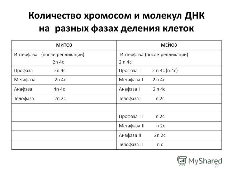 77 Количество хромосом и молекул ДНК на разных фазах деления клеток МИТОЗМЕЙОЗ Интерфаза (после репликации) 2n 4 с Интерфаза (после репликации) 2 n 4 с Профаза 2n 4 с Профаза I 2 n 4 с (n 4 с) Метафаза 2n 4 с Метафаза I 2 n 4 с Анафаза 4n 4 с Анафаза