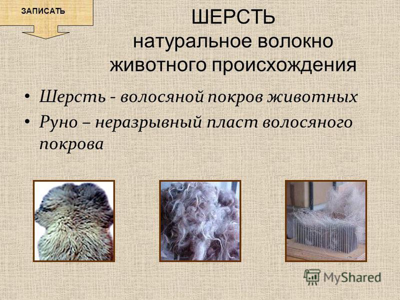 ШЕРСТЬ натуральное волокно животного происхождения ЗАПИСАТЬ Шерсть - волосяной покров животных Руно – неразрывный пласт волосяного покрова