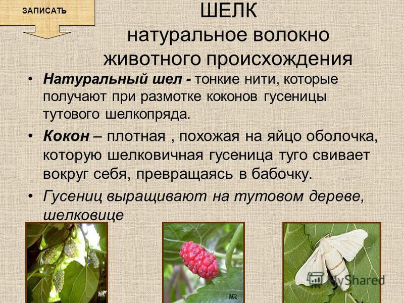 Натуральный шел - тонкие нити, которые получают при размотке коконов гусеницы тутового шелкопряда. Кокон – плотная, похожая на яйцо оболочка, которую шелковичная гусеница туго свивает вокруг себя, превращаясь в бабочку. Гусениц выращивают на тутовом