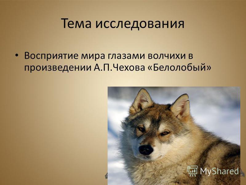 Тема исследования Восприятие мира глазами волчихи в произведении А.П.Чехова «Белолобый»