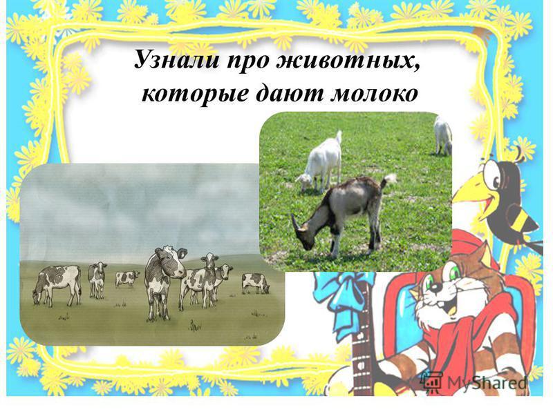 Узнали про животных, которые дают молоко