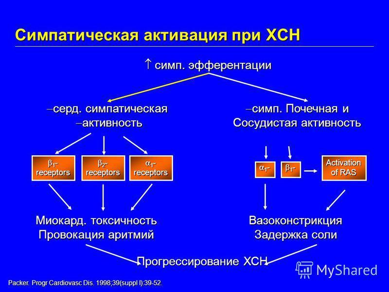 Packer. Progr Cardiovasc Dis. 1998;39(suppl I):39-52. симп. эфферентации симп. эфферентации Прогрессирование ХСН серд. симпатическая серд. симпатическая активность активность 1 - 1 -receptors 2 - 2 -receptors 1 - 1 -receptors Вазоконстрикция Задержка