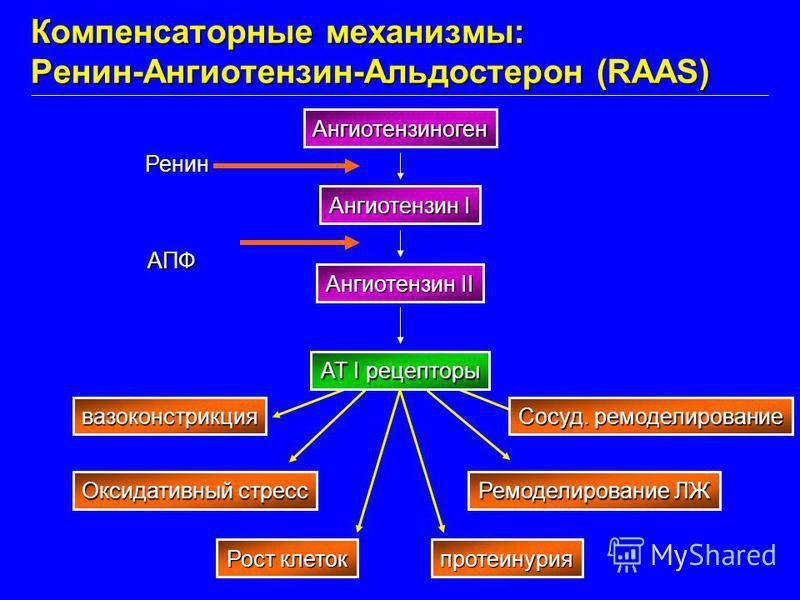 вазоконстрикция Оксидативный стресс Рост клеток протеинурия Ремоделирование ЛЖ Сосуд. моделирование Ангиотензиноген Ангиотензин I Ангиотензин II AT I рецепторы Ренин АПФ Компенсаторные механизмы: Ренин-Ангиотензин-Альдостерон (RAAS)