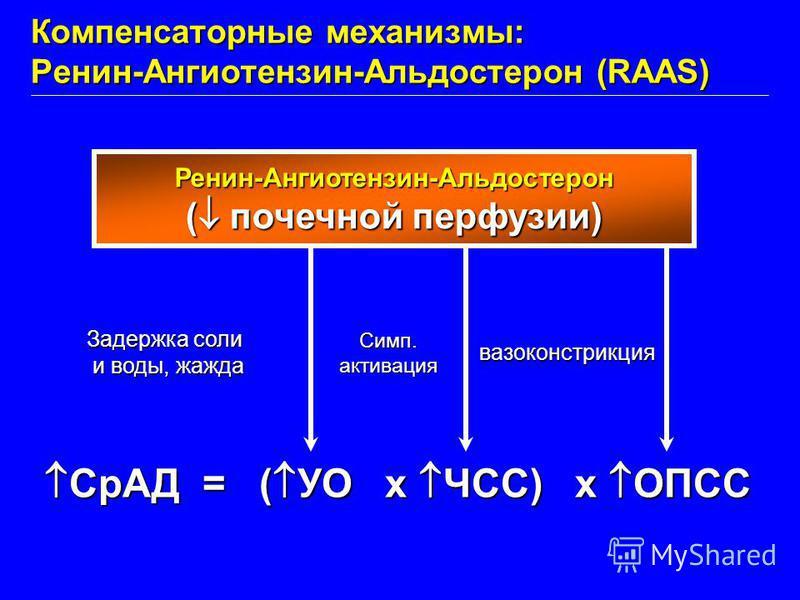 СрАД = ( УО x ЧСС) x ОПСС СрАД = ( УО x ЧСС) x ОПСС Ренин-Ангиотензин-Альдостерон ( почечной перфузии) Задержка соли и воды, жажда и воды, жажда Симп.активация вазоконстрикция Компенсаторные механизмы: Ренин-Ангиотензин-Альдостерон (RAAS)