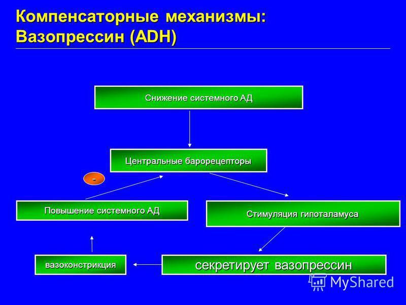 Снижение системного АД Центральные барорецепторы Стимуляция гипоталамуса секретирует вазопрессин вазоконстрикция Повышение системного АД - Компенсаторные механизмы: Вазопрессин (ADH)