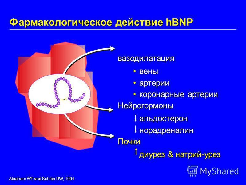 вазодилатация вены артерии коронарные артерии коронарные артерии Нейрогормоныальдостероннорадреналин Почки диурез & натрий-урез Фармакологическое действие hBNP Abraham WT and Schrier RW, 1994