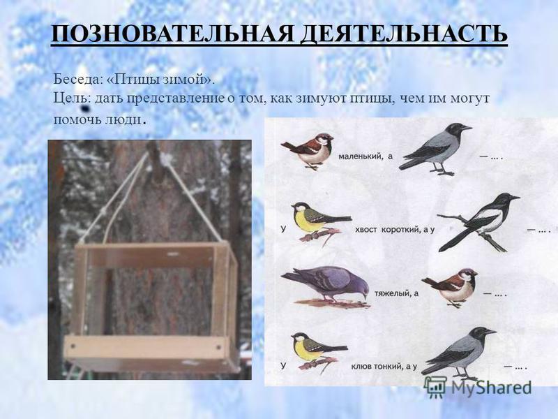 ПОЗНОВАТЕЛЬНАЯ ДЕЯТЕЛЬНАСТЬ Беседа: «Птицы зимой». Цель: дать представление о том, как зимуют птицы, чем им могут помочь люди..