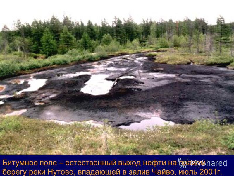 Битумное поле – естественный выход нефти на правом берегу реки Нутово, впадающей в залив Чайво, июль 2001 г.