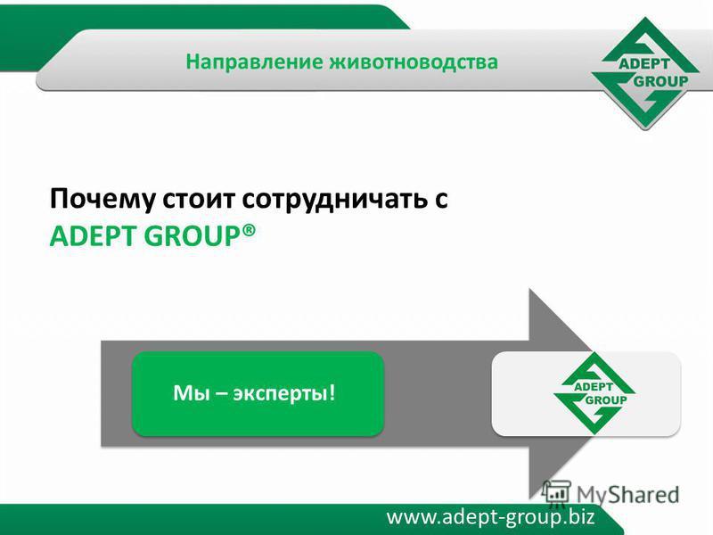 www.adept-group.biz Почему стоит сотрудничать с ADEPT GROUP® Мы – эксперты! Направление животноводства