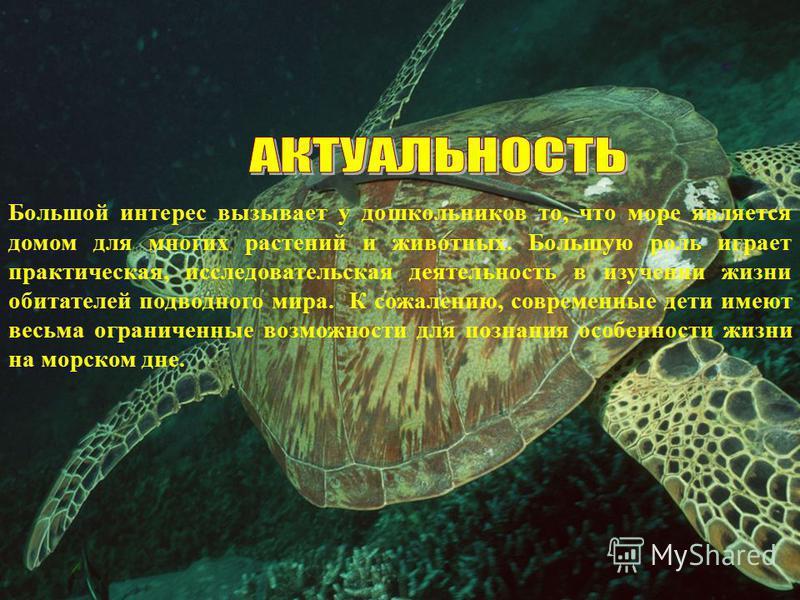 Большой интерес вызывает у дошкольников то, что море является домом для многих растений и животных. Большую роль играет практическая, исследовательская деятельность в изучении жизни обитателей подводного мира. К сожалению, современные дети имеют весь