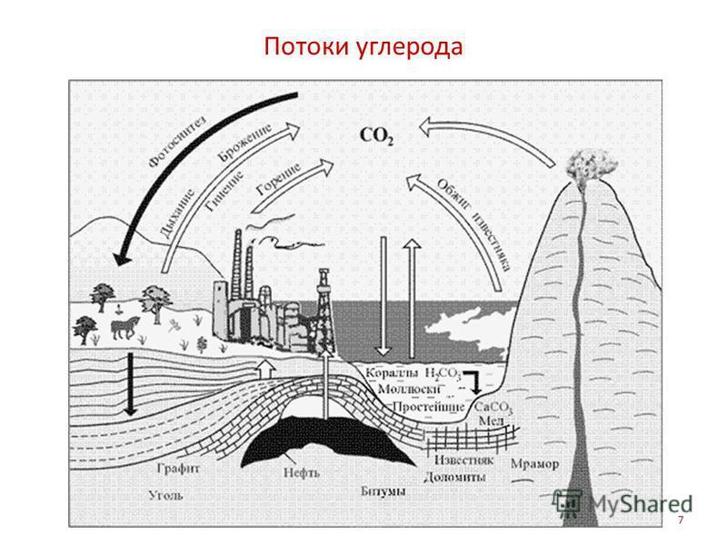 Потоки углерода 7