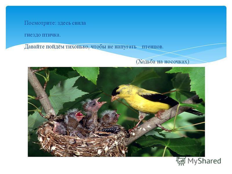 Посмотрите: здесь свила гнездо птичка. Давайте пойдём тихонько, чтобы не напугать птенцов. (Ходьба на носочках)