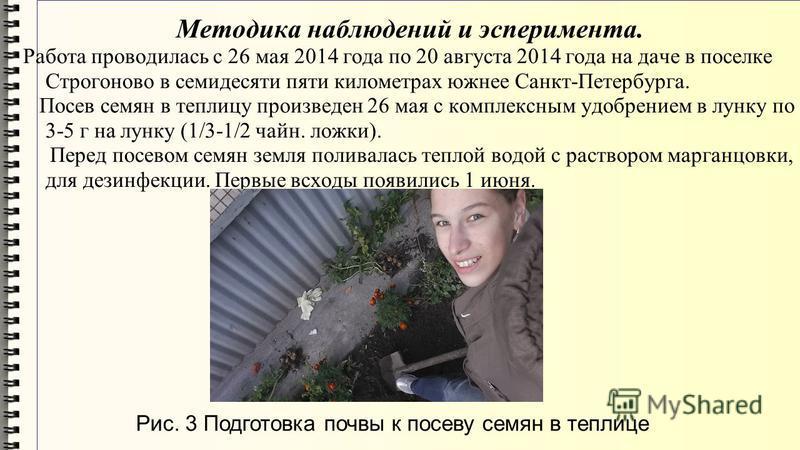 Методика наблюдений и эксперимента. Работа проводилась с 26 мая 2014 года по 20 августа 2014 года на даче в поселке Строгоново в семидесяти пяти километрах южнее Санкт-Петербурга. Посев семян в теплицу произведен 26 мая с комплексным удобрением в лун