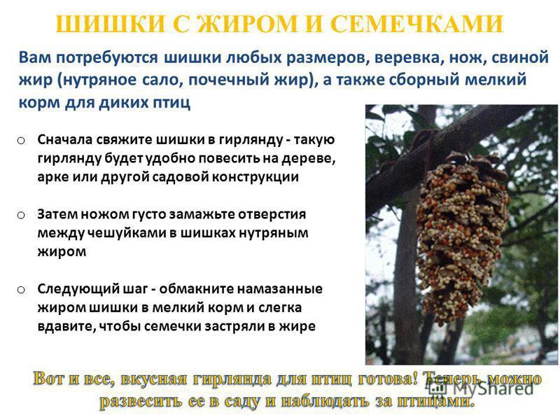 ШИШКИ С ЖИРОМ И СЕМЕЧКАМИ Вам потребуются шишки любых размеров, веревка, нож, свиной жир (нутряное сало, почечный жир), а также сборный мелкий корм для диких птиц o Сначала свяжите шишки в гирлянду - такую гирлянду будет удобно повесить на дереве, ар