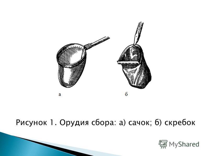 Рисунок 1. Орудия сбора: а) сачок; б) скребок