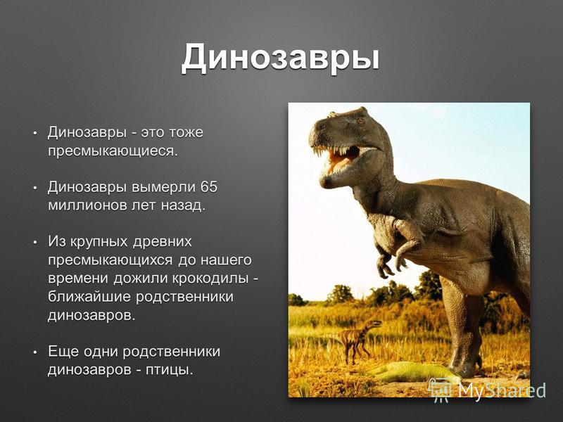 Динозавры Динозавры - это тоже пресмыкающиеся. Динозавры - это тоже пресмыкающиеся. Динозавры вымерли 65 миллионов лет назад. Динозавры вымерли 65 миллионов лет назад. Из крупных древних пресмыкающихся до нашего времени дожили крокодилы - ближайшие р