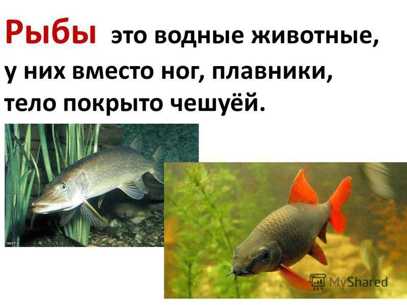 Рыбы это водные животные, у них вместо ног, плавники, тело покрыто чешуёй.