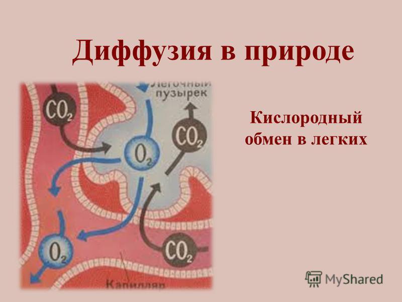 Диффузия в природе Кислородный обмен в легких