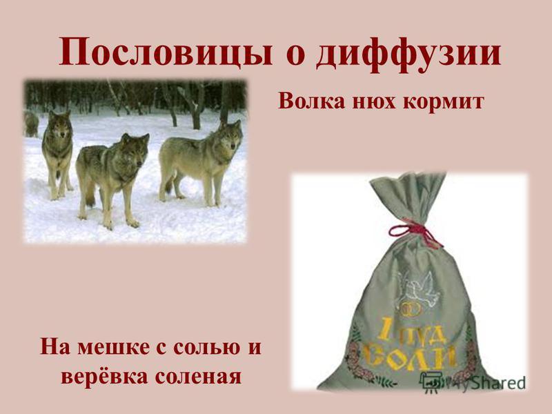 Пословицы о диффузии На мешке с солью и верёвка соленая Волка нюх кормит