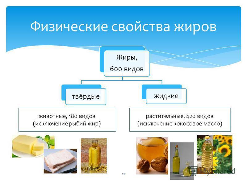 Жиры, 600 видов твёрдые жидкие Физические свойства жиров растительные, 420 видов (исключение кокосовое масло) животные, 180 видов (исключение рыбий жир) 14