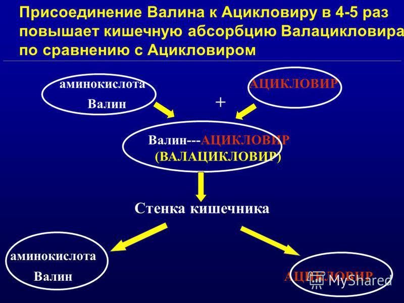 аминокислота АЦИКЛОВИР Валин + Валин---АЦИКЛОВИР (ВАЛАЦИКЛОВИР) аминокислота Валин АЦИКЛОВИР Присоединение Валина к Ацикловиру в 4-5 раз повышает кишечную абсорбцию Валацикловира по сравнению с Ацикловиром Стенка кишечника