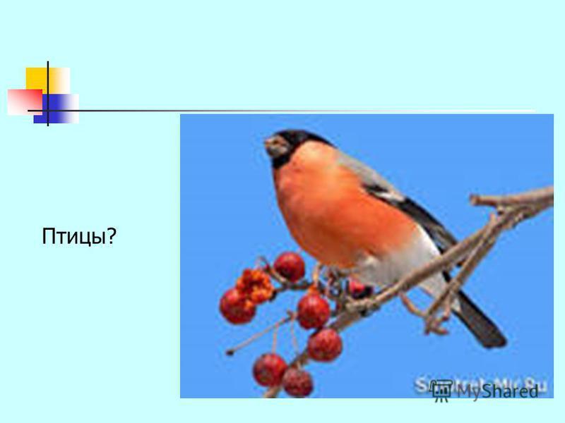 Птицы?