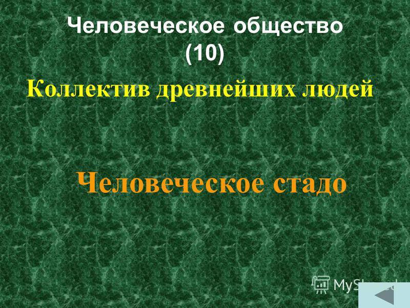 Человеческое общество (10) Коллектив древнейших людей Человеческое стадо
