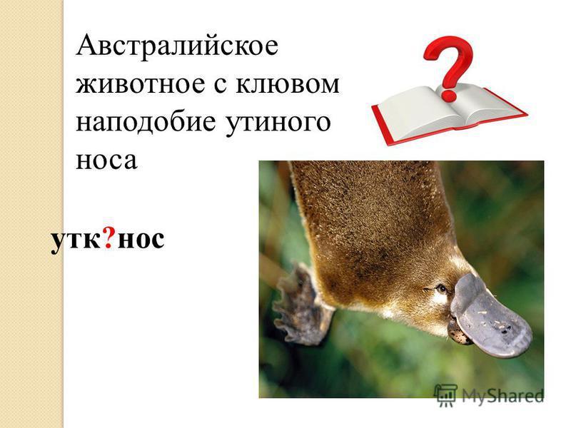 Австралийское животное с клювом наподобие утиного носа утка?нос