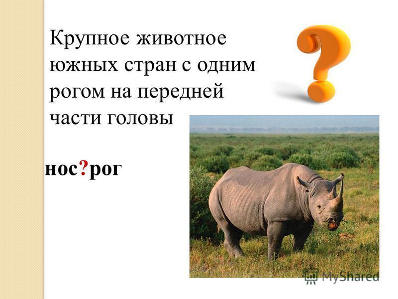 Крупное животное южных стран с одним рогом на передней части головы нос?рог
