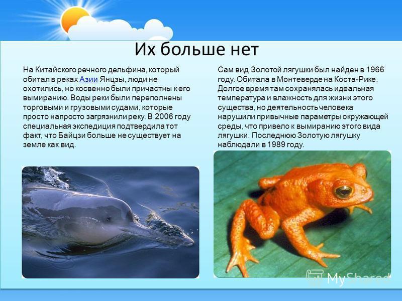 Их больше нет На Китайского речного дельфина, который обитал в реках Азии Янцзы, люди не охотились, но косвенно были причастны к его вымиранию. Воды реки были переполнены торговыми и грузовыми судами, которые просто напросто загрязнили реку. В 2006 г