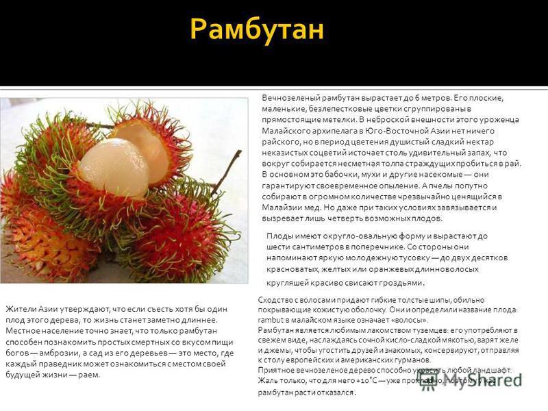 Жители Азии утверждают, что если съесть хотя бы один плод этого дерева, то жизнь станет заметно длиннее. Местное население точно знает, что только рамбутан способен познакомить простых смертных со вкусом пищи богов амброзии, а сад из его деревьев это