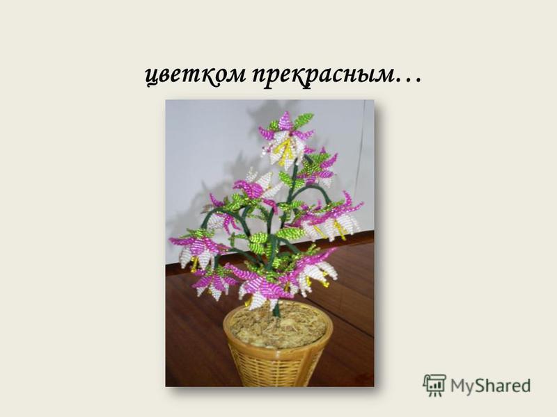 цветком прекрасным…