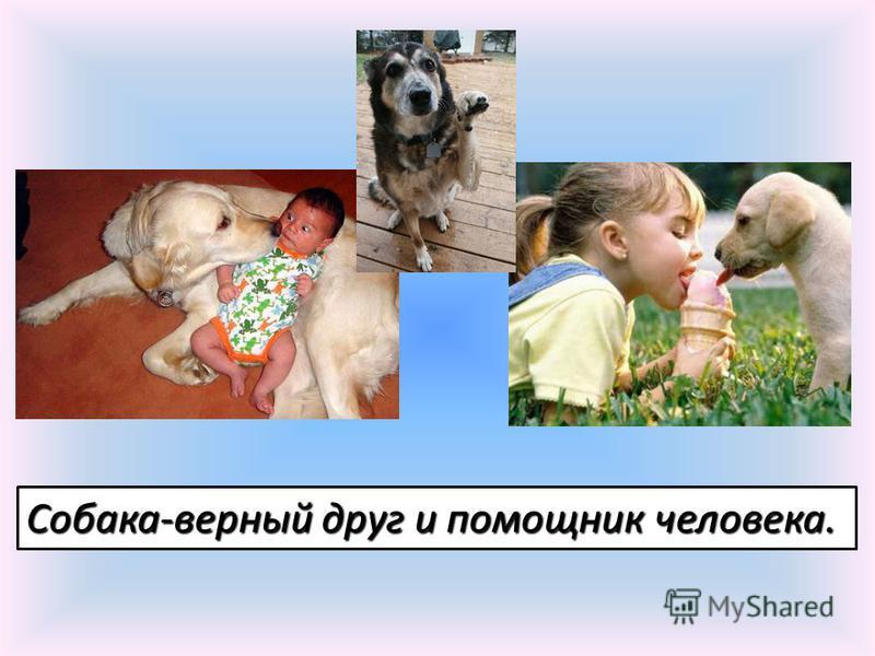 Собака-верный друг и помощник человека.
