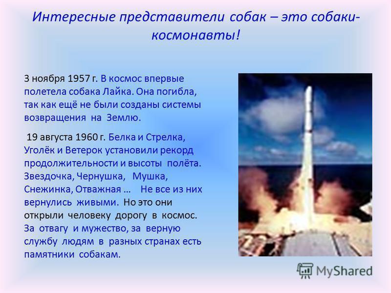 Интересные представители собак – это собаки- космонавты! 3 ноября 1957 г. В космос впервые полетела собака Лайка. Она погибла, так как ещё не были созданы системы возвращения на Землю. 19 августа 1960 г. Белка и Стрелка, Уголёк и Ветерок установили р