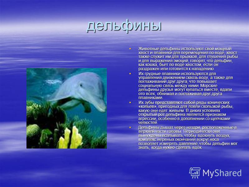 дельфины Животные дельфины используют свой мощный хвост и плавники для перемещения по воде, хвост также служит им для прыжков, для глушения рыбы и для выражения эмоций, говорят, что дельфин, как кошка, бьет по воде хвостом, если он раздражен или гото