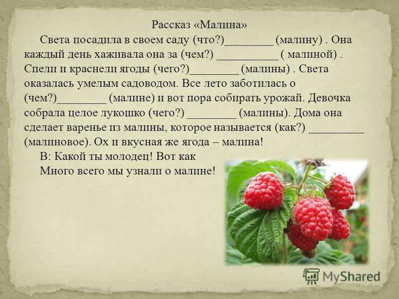 Рассказ «Малина» Света посадила в своем саду (что?)________ (малину). Она каждый день хаживала она за (чем?) __________ ( малиной). Спели и краснели ягоды (чего?)________ (малины). Света оказалась умелым садоводом. Все лето заботилась о (чем?)_______