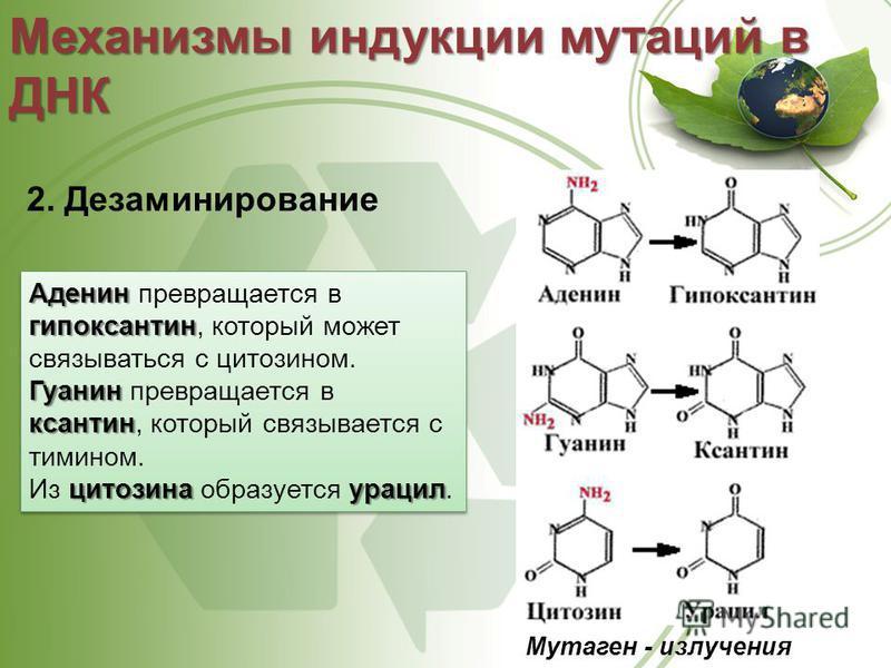 2. Дезаминирование Механизмы индукции мутаций в ДНК Мутаген - излучения Аденин гипоксантин Гуанин ксантин цитозинаурацил Аденин превращается в гипоксантин, который может связываться с цитозином. Гуанин превращается в ксантин, который связывается с ти