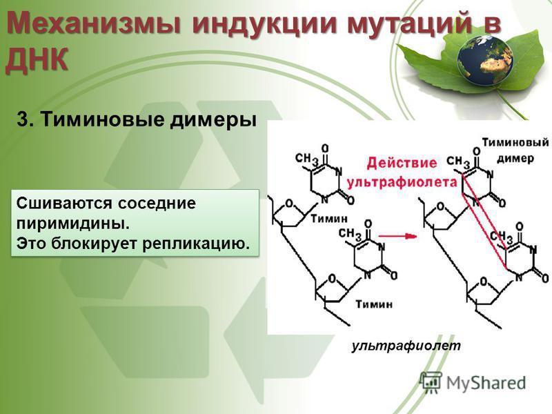 3. Тиминовые димеры Механизмы индукции мутаций в ДНК ультрафиолет Сшиваются соседние пиримидины. Это блокирует репликацию. Сшиваются соседние пиримидины. Это блокирует репликацию.
