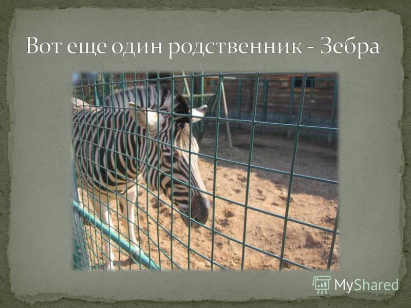 Конь Пони