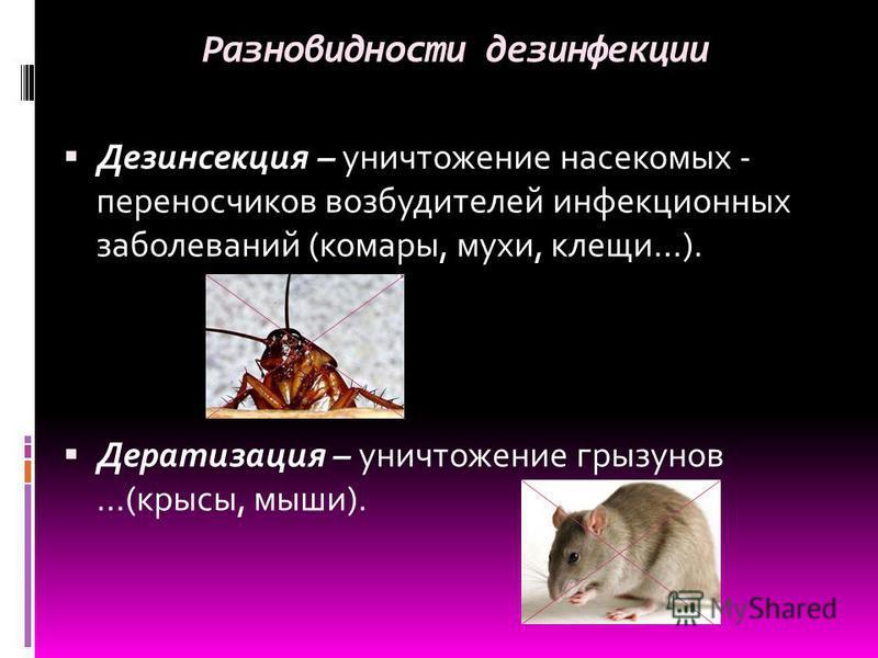 Разновидности дезинфекции Дезинсекция – уничтожение насекомых - переносчиков возбудителей инфекционных заболеваний (комары, мухи, клещи…). Дератизация – уничтожение грызунов …(крысы, мыши).