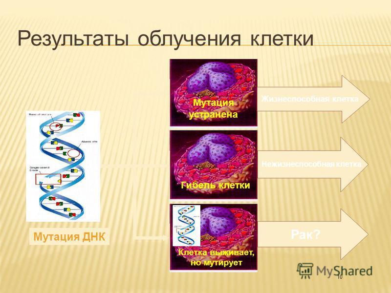 10 Мутация ДНК Клетка выживает, но мутирует Рак? Гибель клетки Мутация устранена Нежизнеспособная клетка Жизнеспособная клетка Результаты облучения клетки
