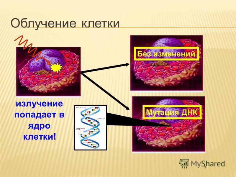 9 излучение попадает в ядро клетки! Без изменений Мутация ДНК Облучение клетки