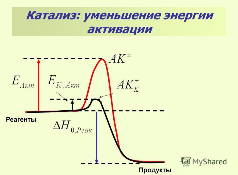 Реагенты Продукты Катализ: уменьшение энергии активации