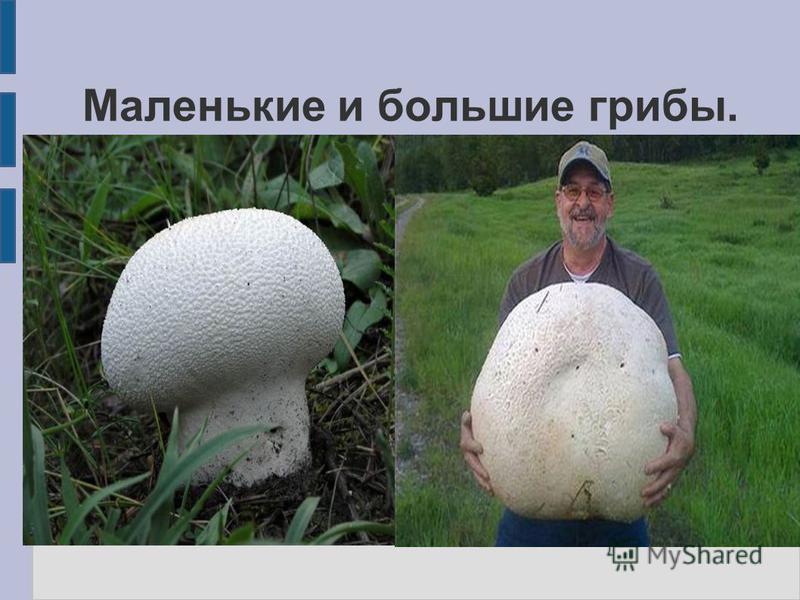 Маленькие и большие грибы.