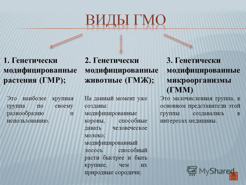1. Генетически модификациированные растения (ГМР); 2. Генетически модификациированные животные (ГМЖ); 3. Генетически модификациированные микроорганызмы (ГММ) На данный момент уже созданы: модификациированные коровы, способные давать человеческое моло